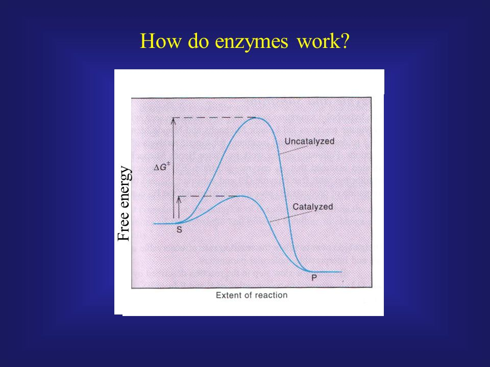 how do enzymes work Green apps and gadgets: do eco drain cleaners work  earth enzymes drain  so how do they work you dilute the earth enzymes powder with warm water and pour.