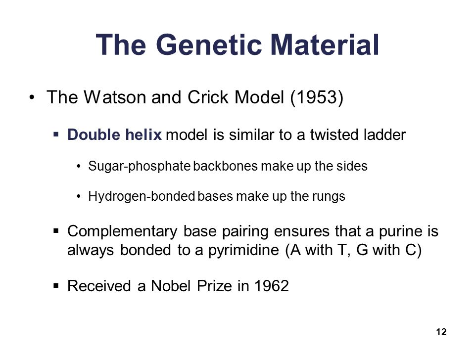 dna watson and crick model pdf