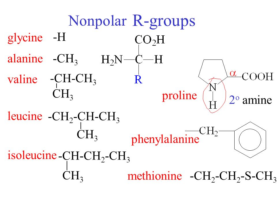 Glutamic acid r group