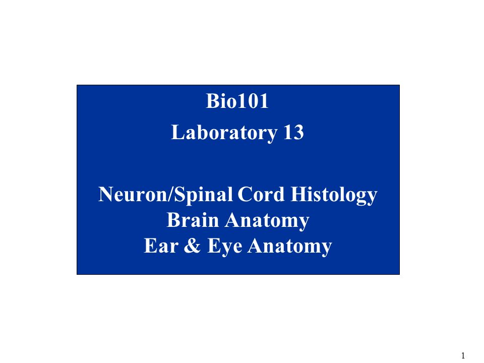 Neuron/Spinal Cord Histology Brain Anatomy Ear & Eye Anatomy - ppt ...