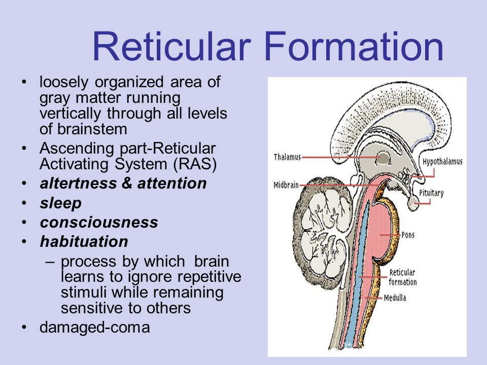 function of the reticular formation