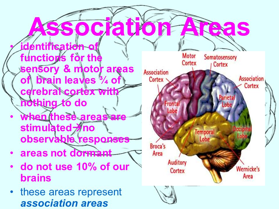 THE BRAIN Structure & Function.