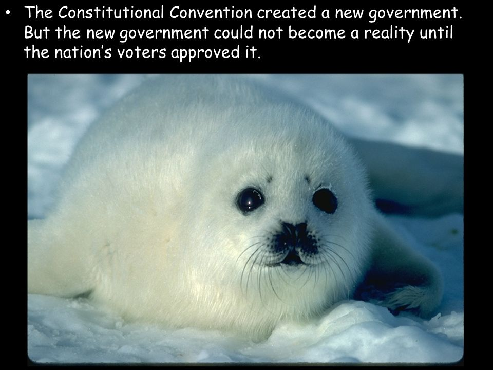 The Constitutional Convention created a new government