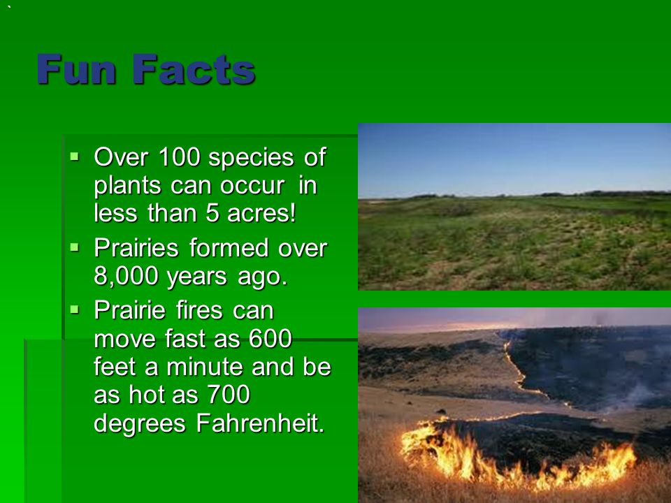 The prairie by taylor ppt video online download for Interesting facts north america