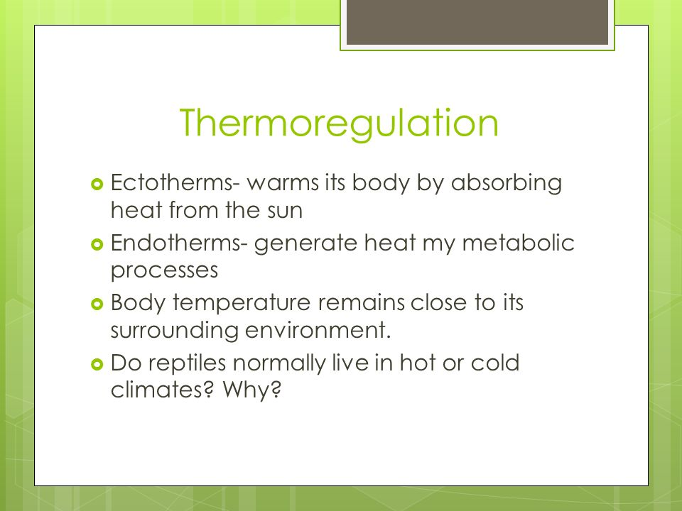 a study of the patterns of thermoregulation and respiration in endotherms and ectotherms Thermoregulation in both ectotherms and endotherms is controlled mainly by the preoptic area of the anterior hypothalamus [3] such homeostatic control is separate from the sensation of temperature.