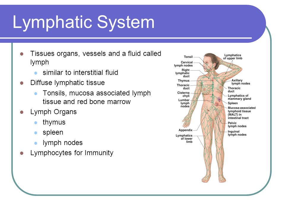 Lymphatic System Tissues organs, vessels and a fluid called lymph ...