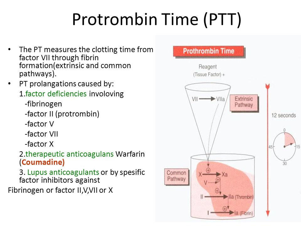 intrinsic and extrinsic coagulation pathways pdf