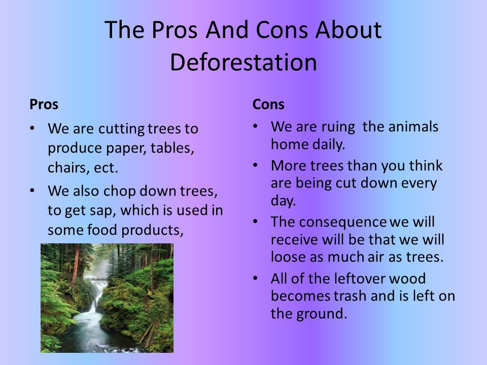 essay on why we should not cut trees Trees should not be cut down see, trees let off oxygen for us to breathe, so we need them to breathe people cut down trees to build buildings and destroy forests to make spa ce for building places.
