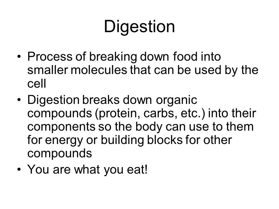 Digestive System Transport Quiz Tomorrow Ppt Video