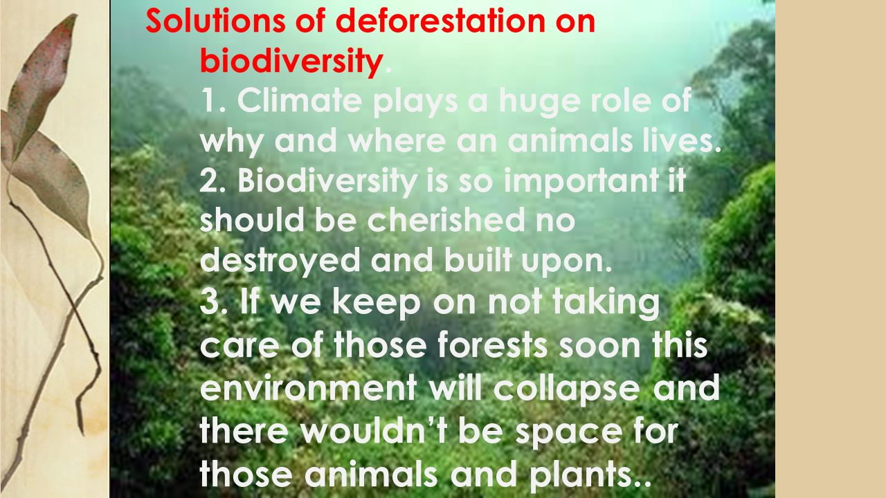 deforestation solution Deforestation is forest loss through urban sprawl, land clearing for agriculture, wildfire, disease or timber harvest the united states went through a period of intense deforestation between 1600.