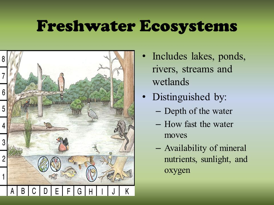 Ecosystems: Meaning and Types of Ecosystem
