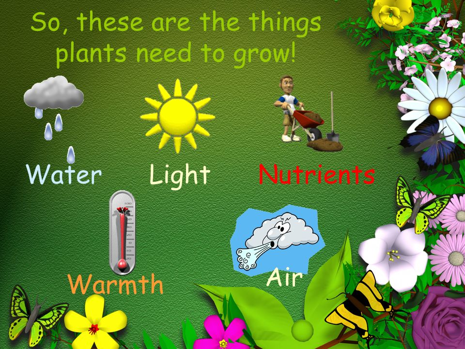 The various things needed for plants to grow