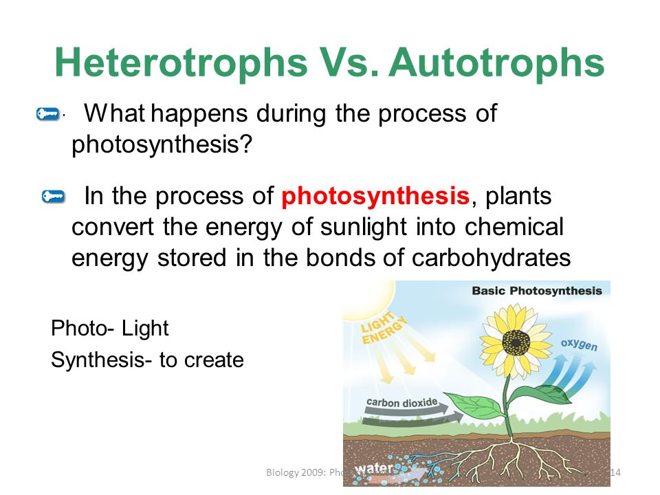 Photosynthesis for Kids