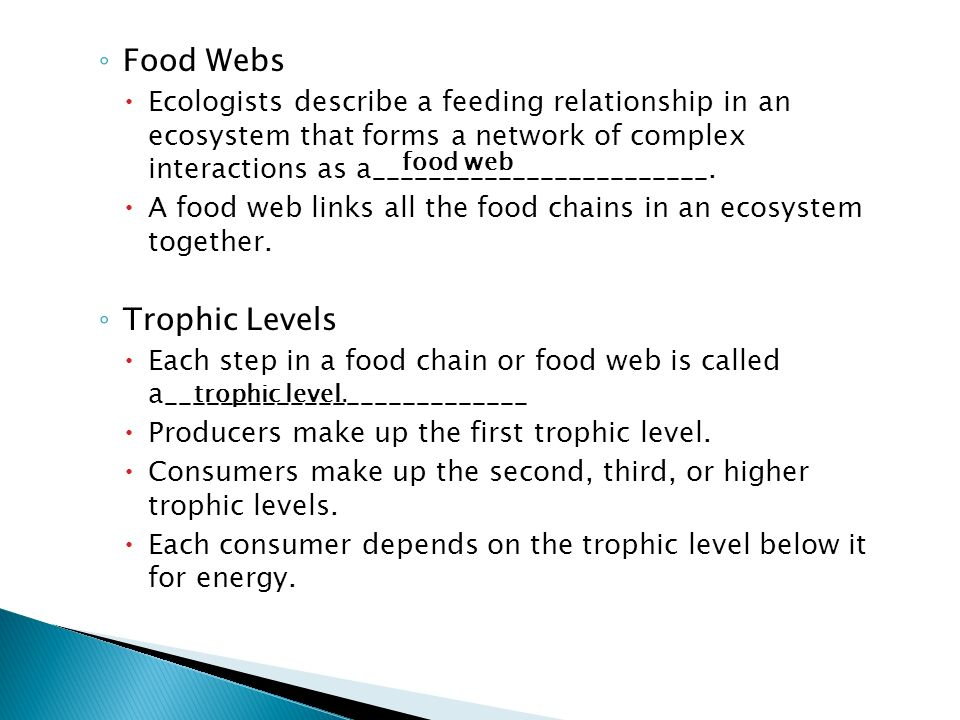 Food Webs Trophic Levels