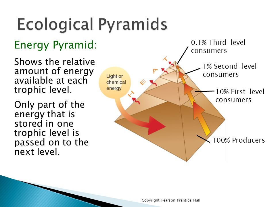 Ecological Pyramids Energy Pyramid: