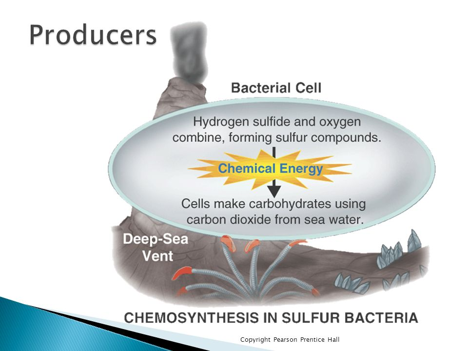 vent chemosynthesis