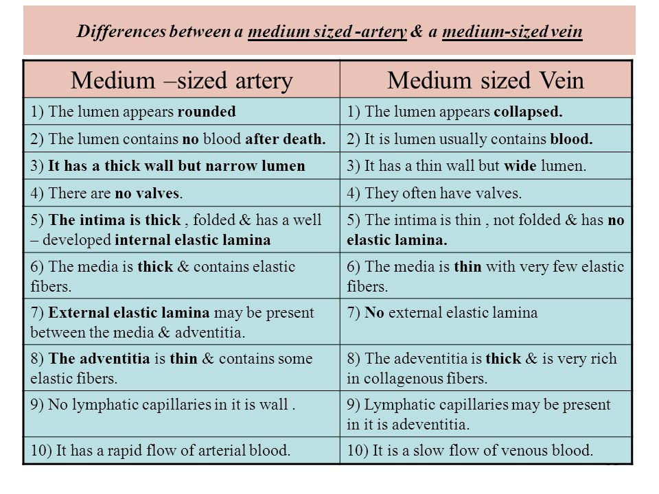 difference between artery and vein pdf