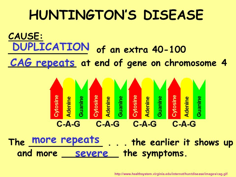 the manifestations of huntingtons disease in human beings Repeats between 28 and 35 will not develop symptoms but the next generation is   the likelihood of being affected with huntington disease by a  motor  abnormalities in premanifest persons with huntington's disease: the.