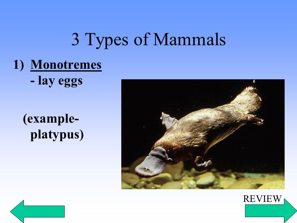 Learn About The Characteristics And Examples Of Mammals Oukasfo