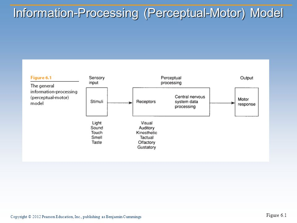 Perceptual Development Ppt Video Online Download