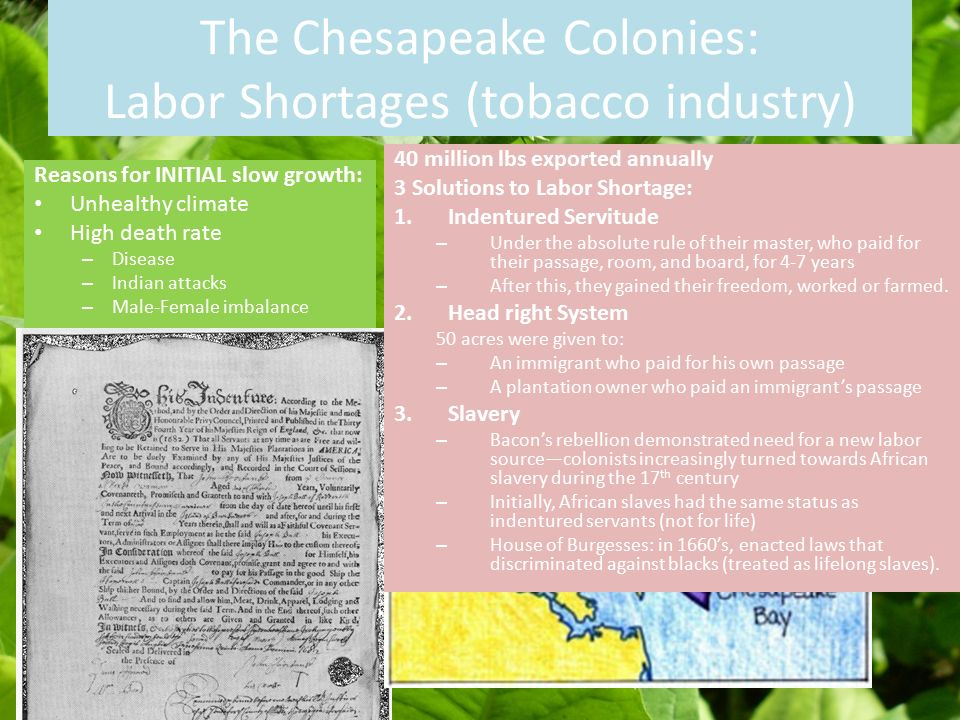 the chesapeake region The chesapeake colonies were the colony and dominion of virginia, later the commonwealth of virginia, and province of maryland, later maryland, both colonies located in british america and centered on the chesapeake baysettlements of the chesapeake region grew slowly due to disease (malaria etc) most of these settlers were male immigrants from england who died soon after their arrival.