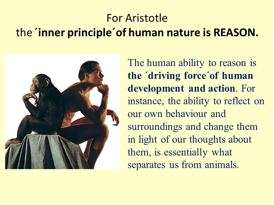 aristotles belief of human purpose of life to achieve happiness Read this essay on aristotles views  he wrote that to achieve morally good ethics one has to be  our ultimate purpose in life is to strive for happiness.