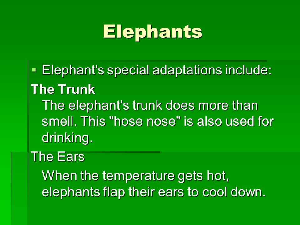 Animal Adaptations – body parts that help them survive in ...