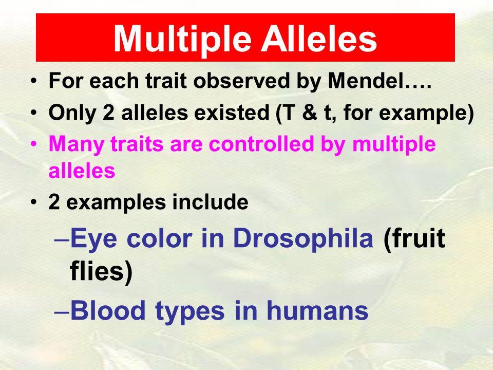Multiple Alleles Eye Color In Drosophila Fruit Flies Ppt Video