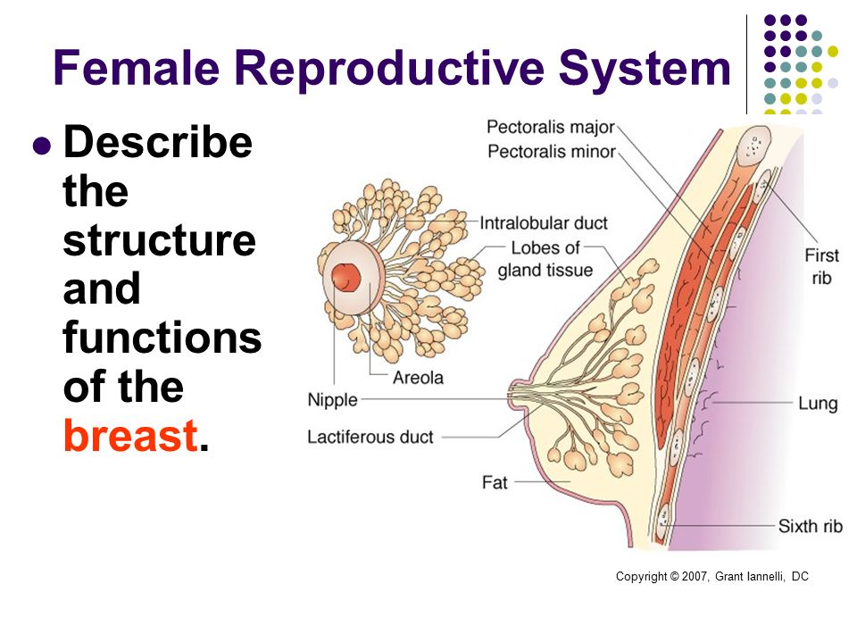 hs130: anatomy & physiology ii - ppt download, Muscles