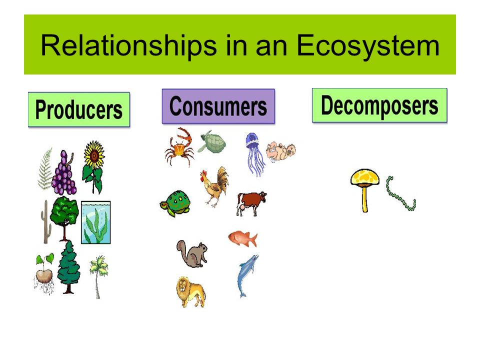 biological relationship in the ecosystem