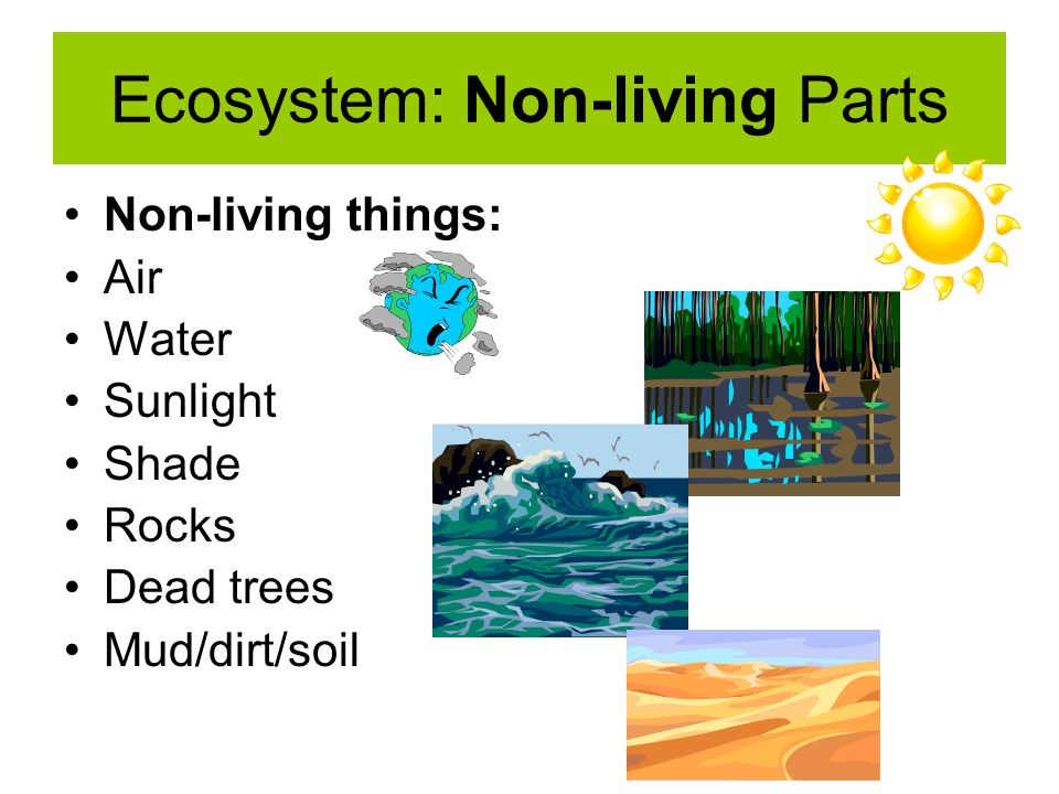 Parts of the Ecosystem S4L1 - ppt download