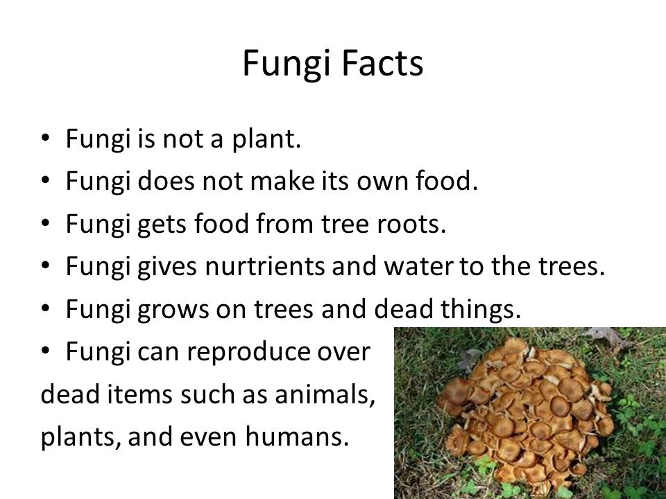 Can A Mushroom Make Its Own Food