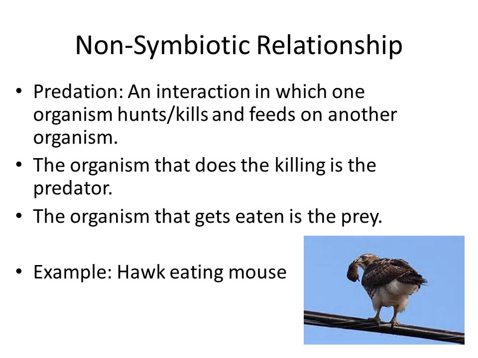symbiotic relationship and non