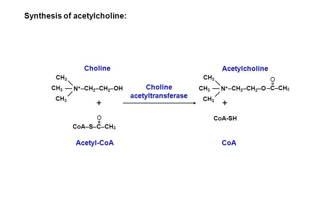 + + Synthesis of acetylcholine: Choline Acetylcholine Choline