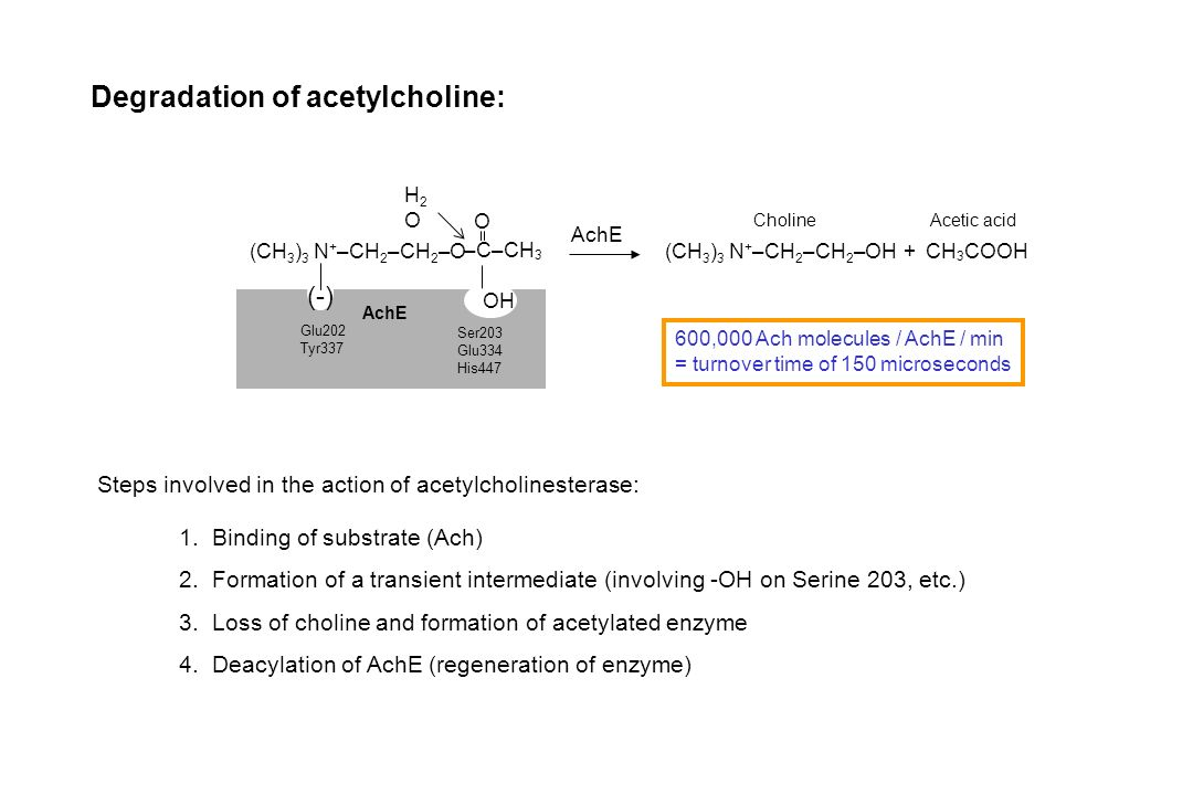 Degradation of acetylcholine: