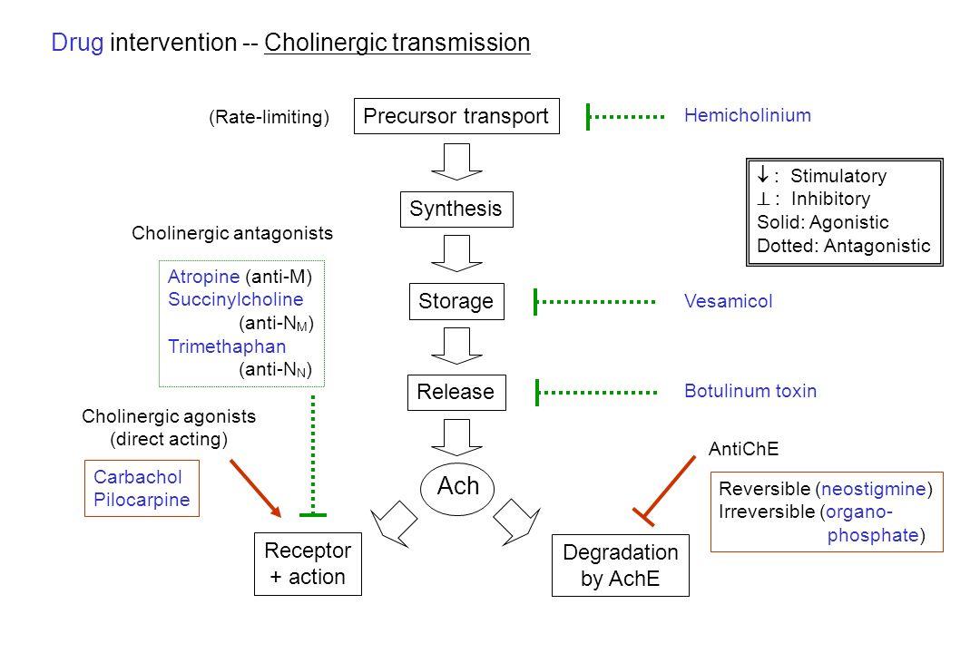 Drug intervention -- Cholinergic transmission