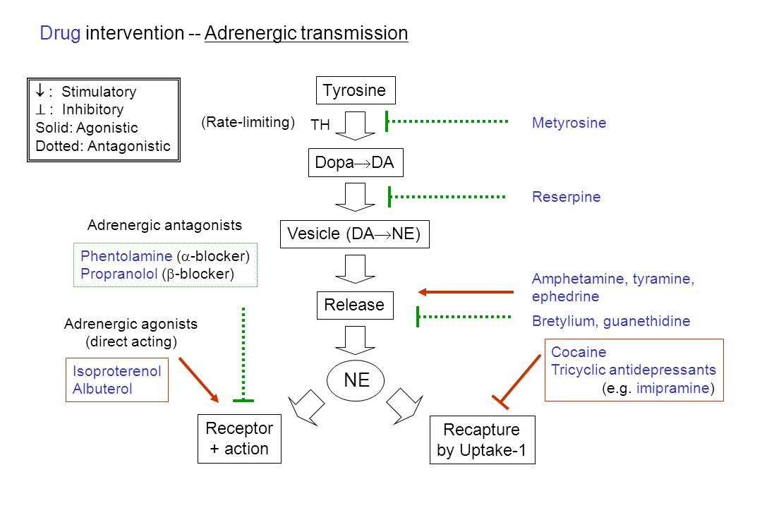 Drug intervention -- Adrenergic transmission
