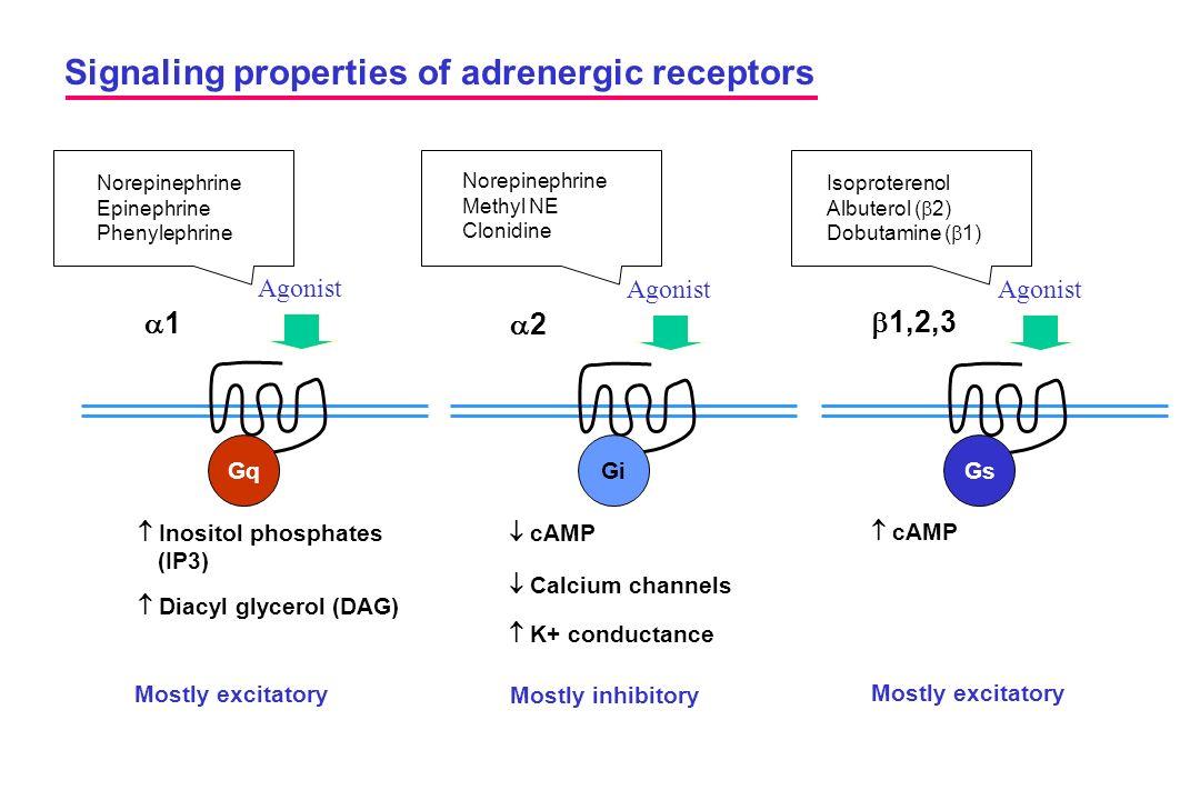 Signaling properties of adrenergic receptors