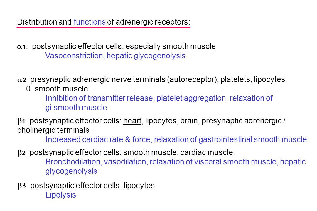 Distribution and functions of adrenergic receptors: