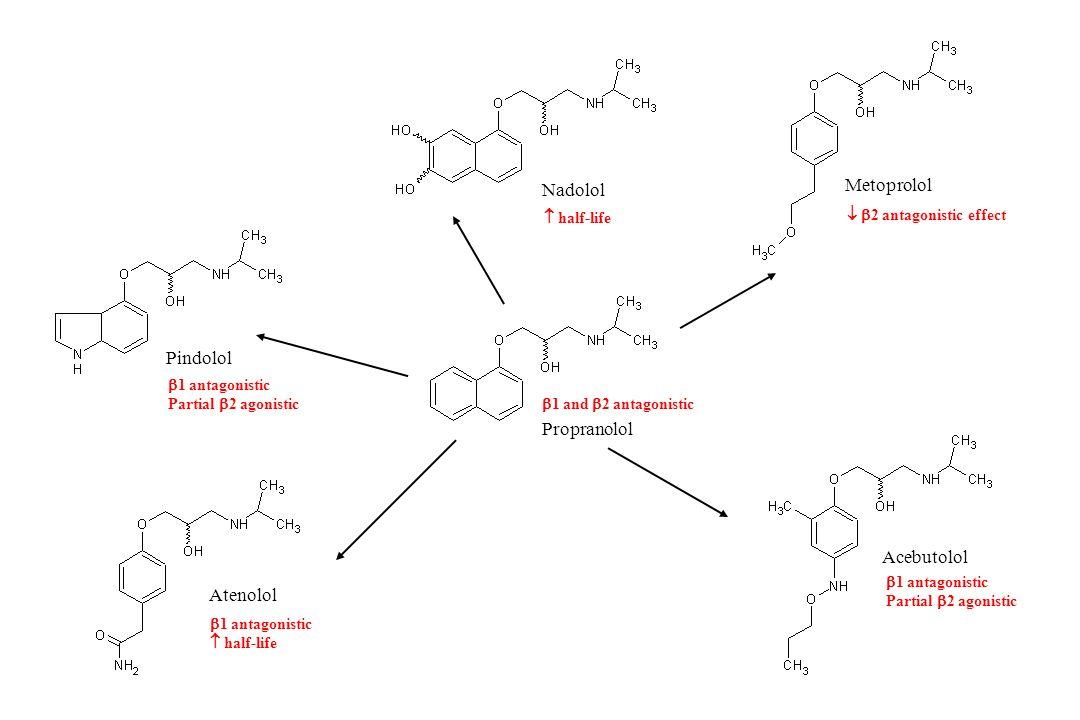 Metoprolol Nadolol Pindolol Propranolol Acebutolol Atenolol