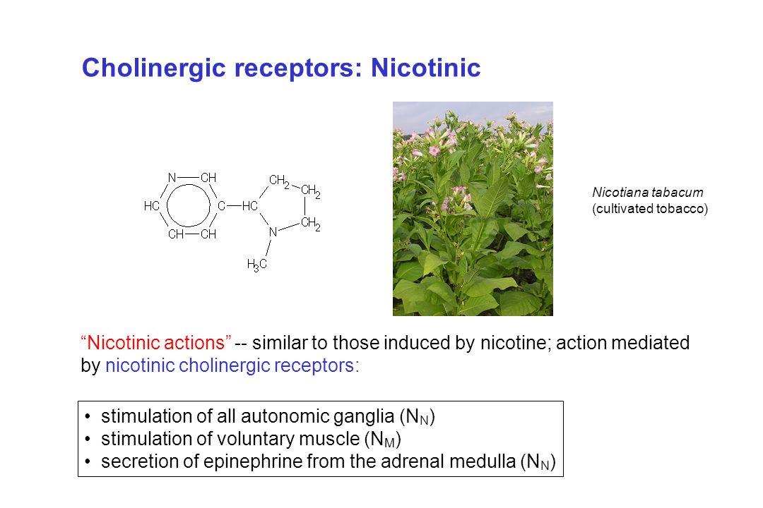 Cholinergic receptors: Nicotinic