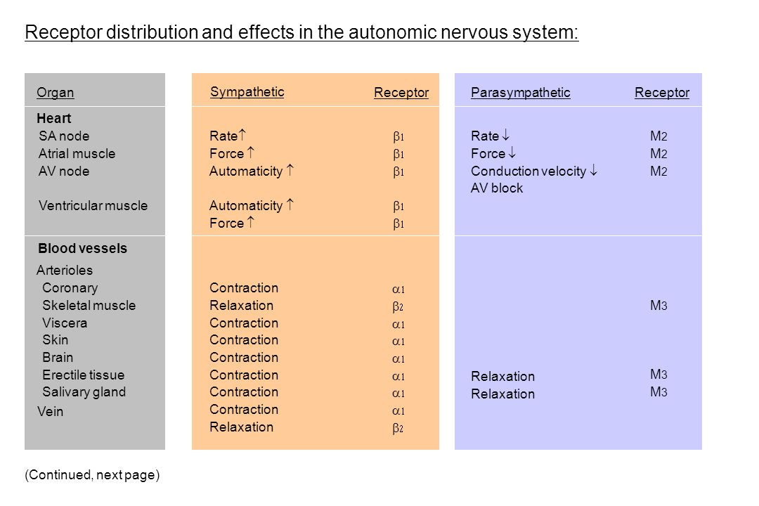 Receptor distribution and effects in the autonomic nervous system: