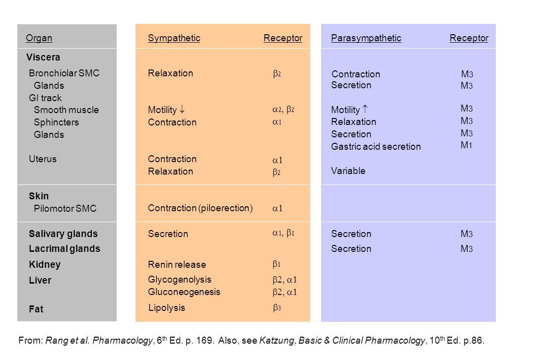 Organ Sympathetic. Receptor. Parasympathetic. Receptor. Viscera. Bronchiolar SMC. Glands. GI track.