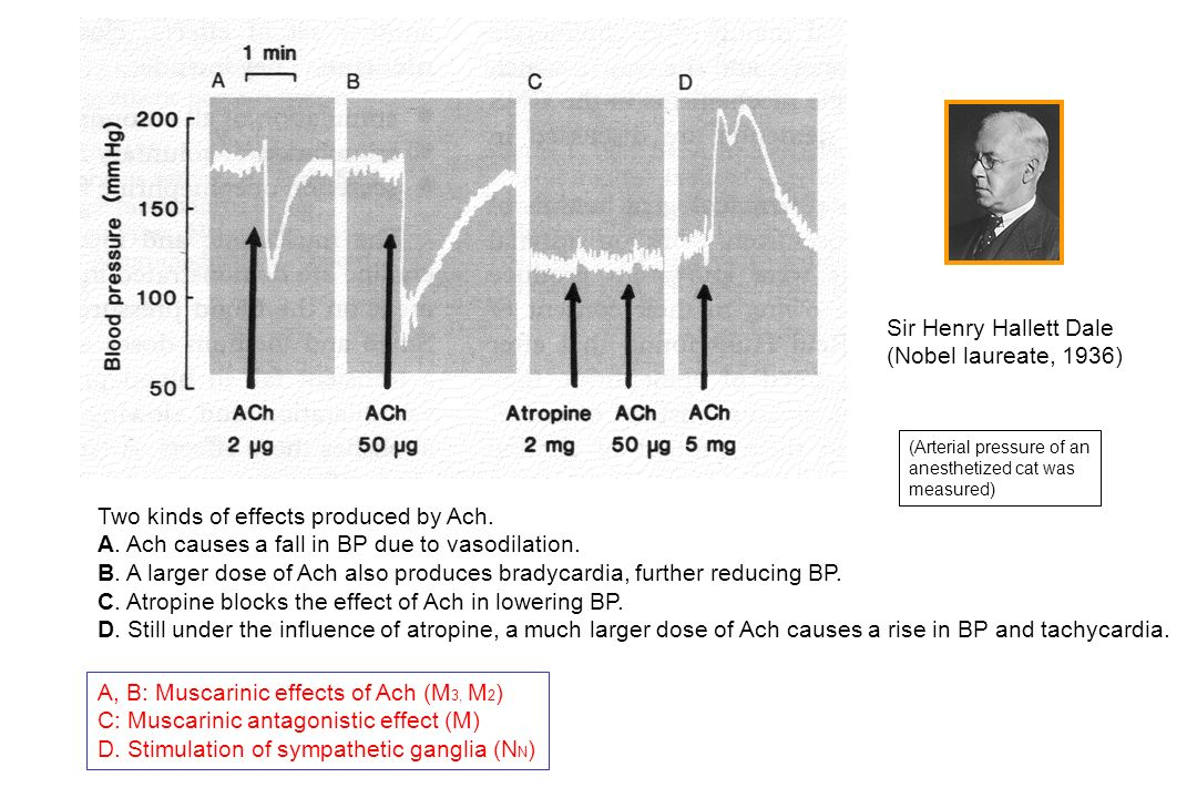 Two kinds of effects produced by Ach.