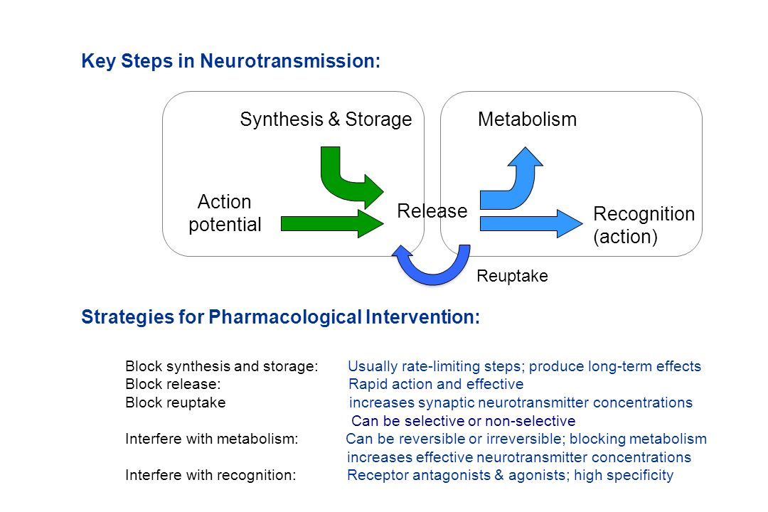 Key Steps in Neurotransmission:
