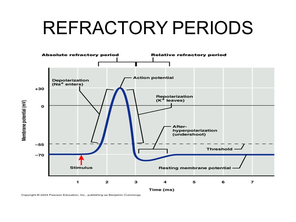 relationship between conduction velocity and refractory period