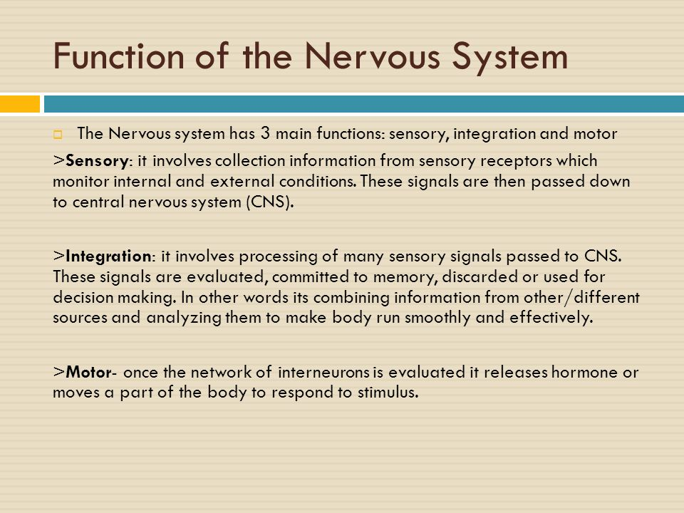 the main functions of the nervous system The sympathetic branch of your autonomic nervous system originates in the  spinal cord it goes into action to prepare the body for physical or mental.