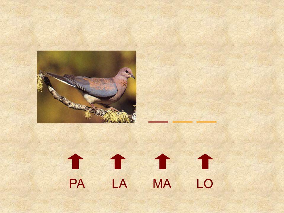 __ __ __ PA LA MA LO