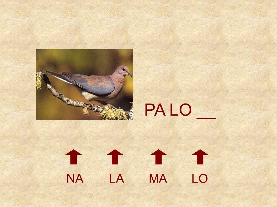 PA LO __ NA LA MA LO