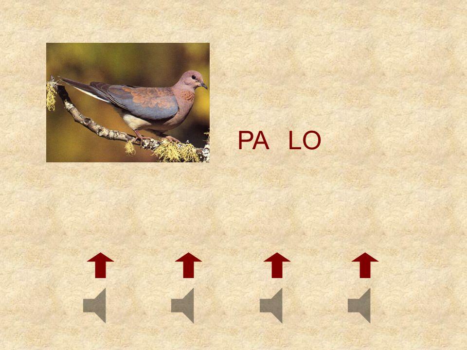 PA LO
